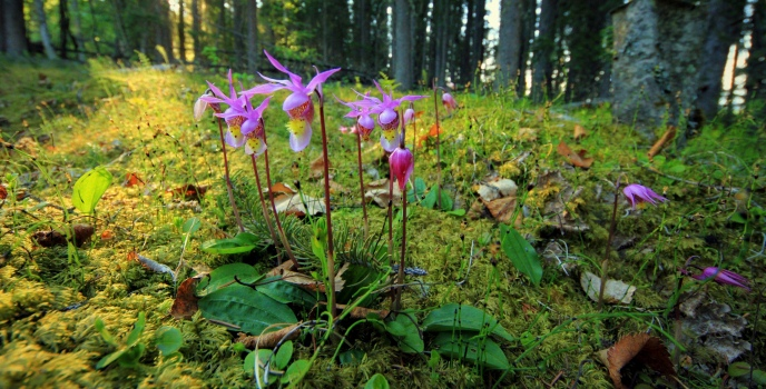 Orchids in the forest