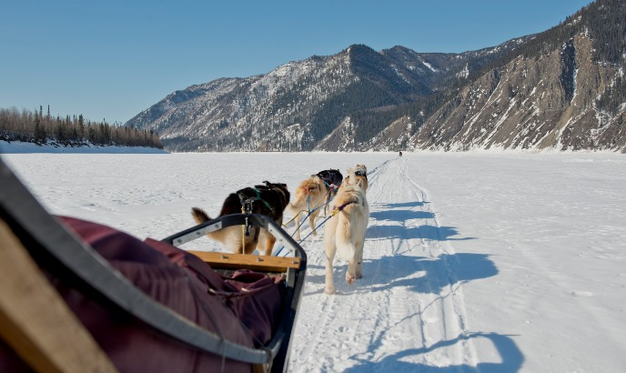 A side view of a dogsled and team mushing down the Yukon River in winter with tall bluffs in the distance