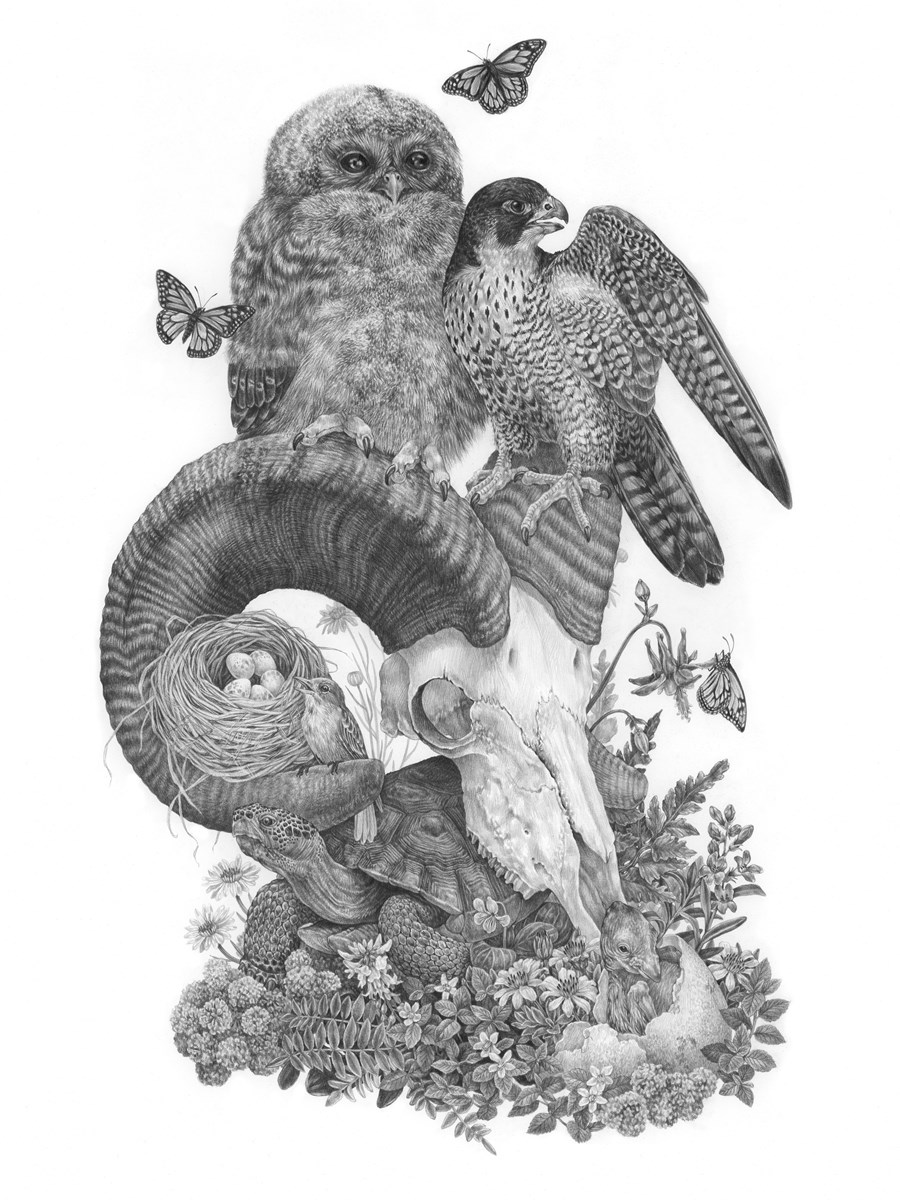 Detailed drawing of many special status species at Zion, including spotted owl, bighorn sheep, and peregrine falcon.