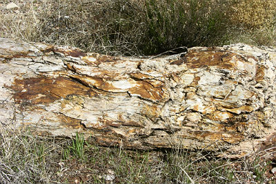 log of petrified wood found in the Chinle Formation