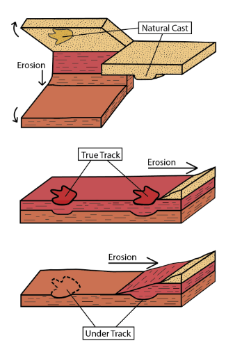 diagram of types of tracks as rock layers erode