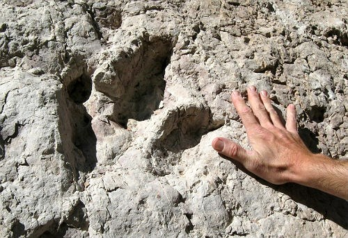 Eubrontes dinosaur track with hand for scale